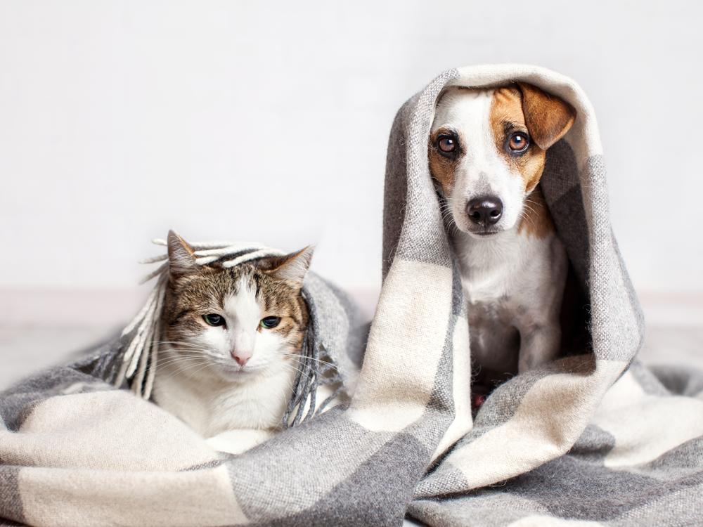Tips for making your home pet-friendly