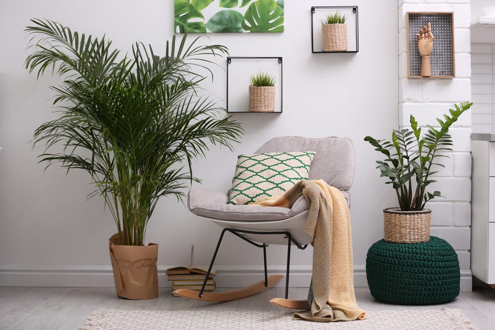 Improve Your Home and Office with the Benefits of Houseplants