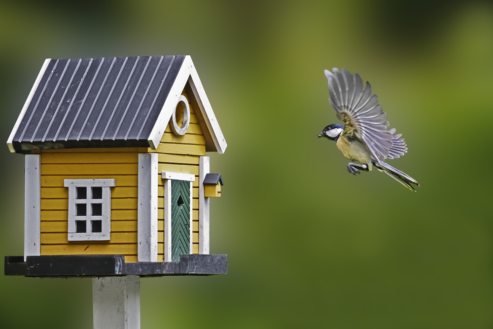 How to attract birds to your home